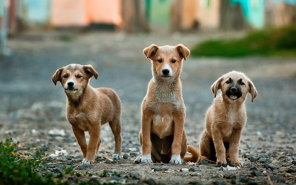 Dog Behaviors like Aggression and Fearfulness are linked to Breed Genetics- Finds Study