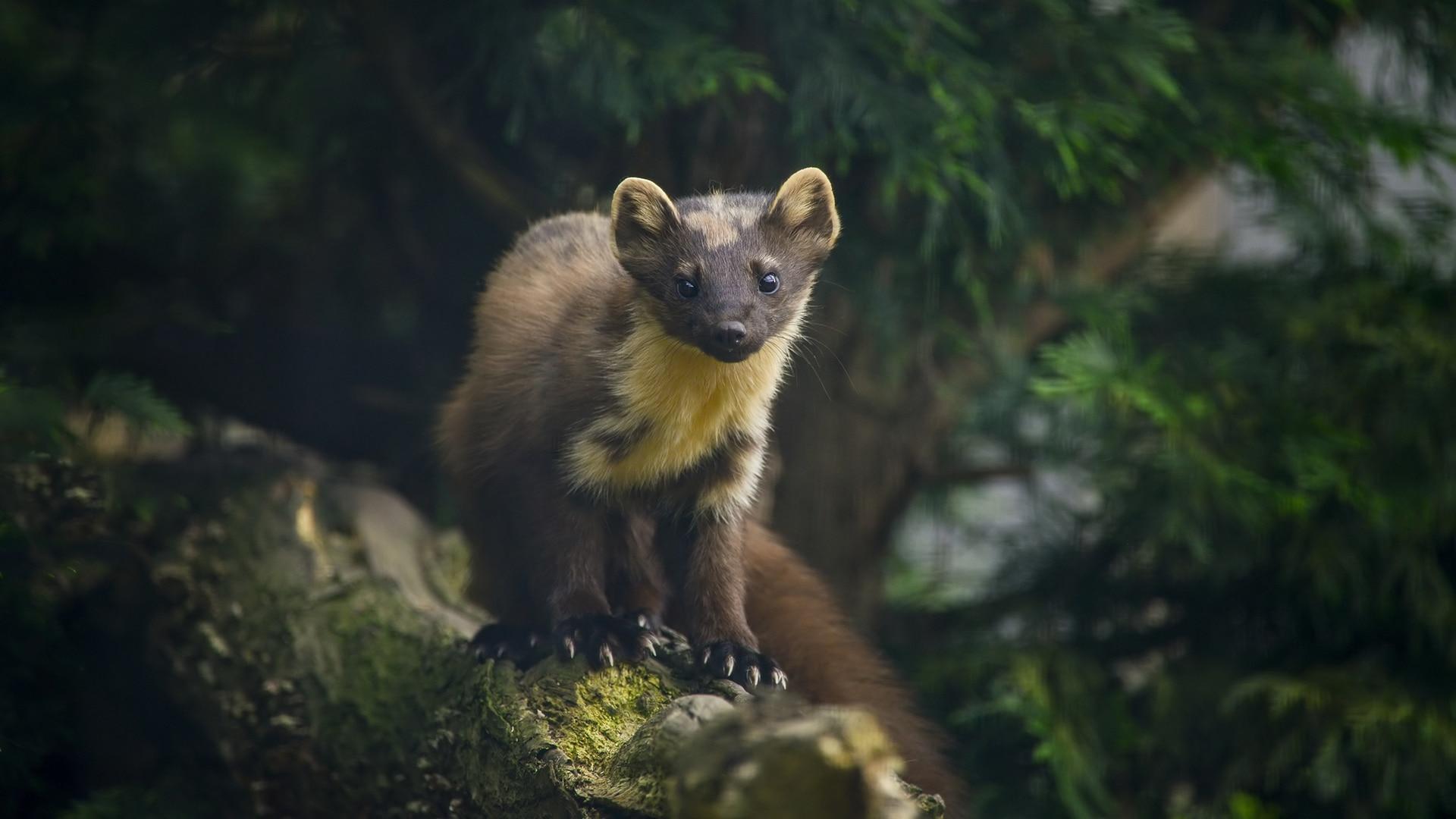 Você está interessado em estudar natureza e animais? Study M.Sc. Em Zoologia, com as melhores faculdades 2