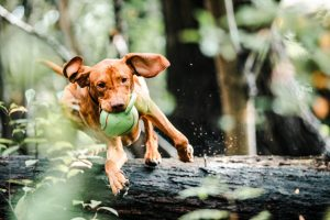 A Vet Talks About the Best Ingredients for Joint Supplements for Dogs