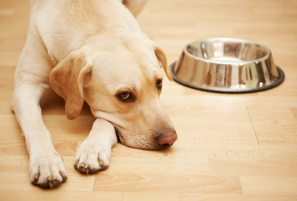 CBD Oil for Treating Various Dogs Diseases